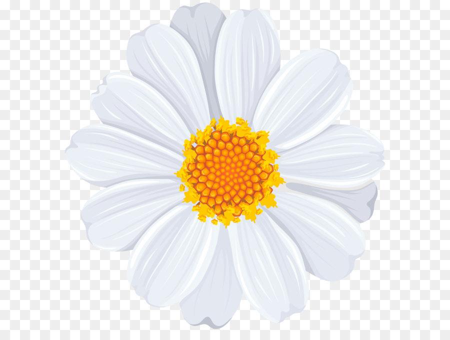 Common daisy Clip art.