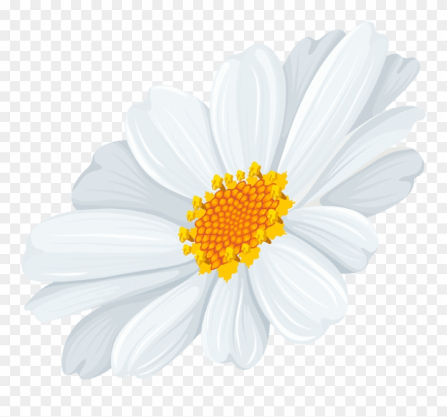 Free Png Download White Daisy Transparent Png Images.