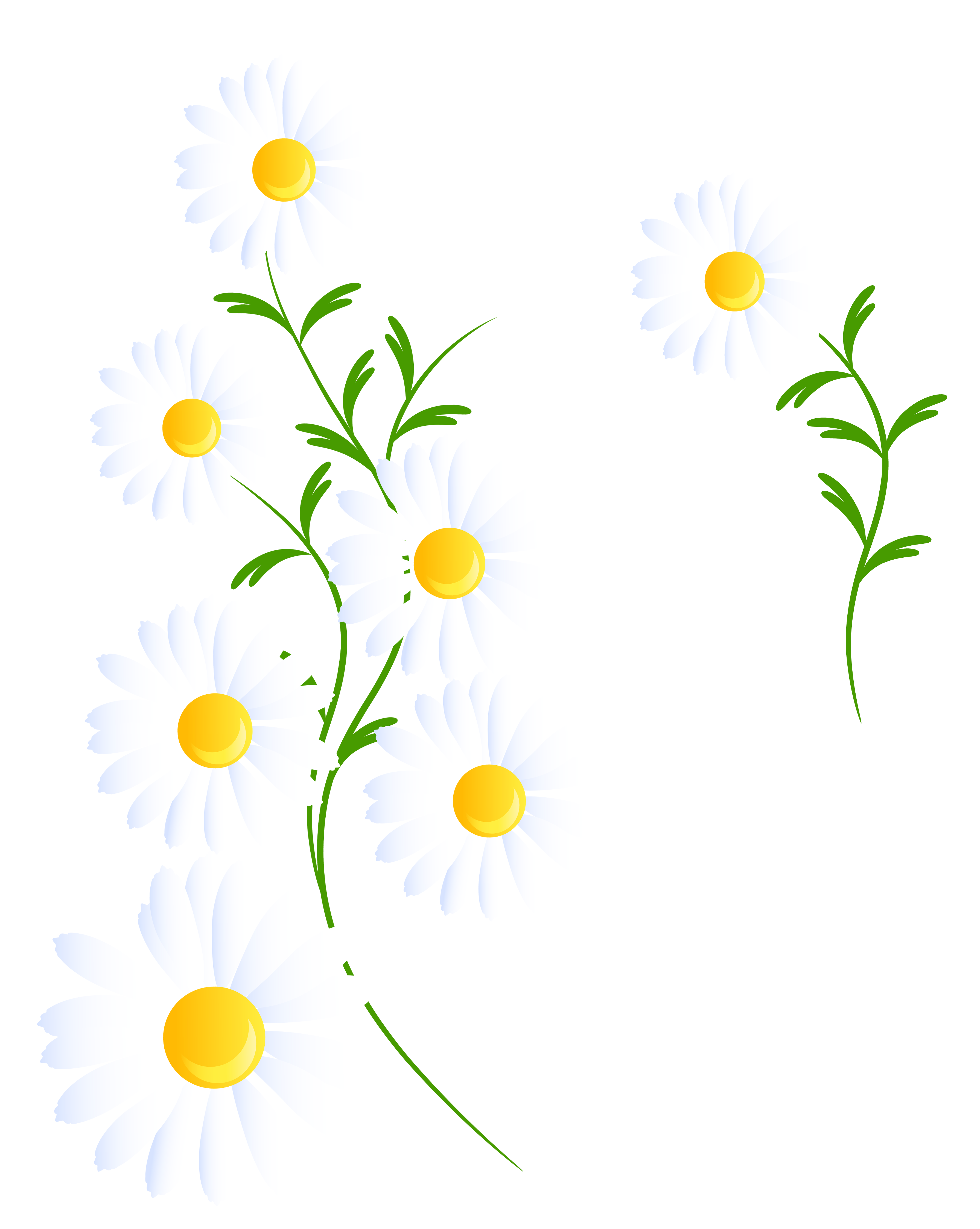White daisys clipart - Clipground White Daisy Flowers Clipart