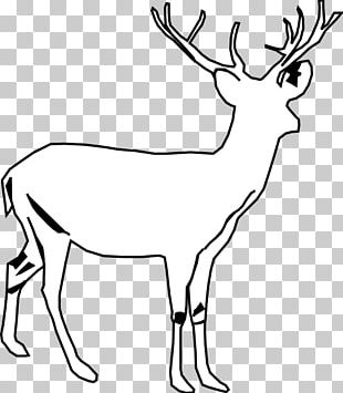 White Deer PNG Images, White Deer Clipart Free Download.