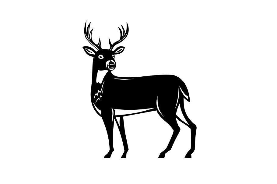 Whitetail Deer Side View Woodcut ~ Illustrations ~ Creative.
