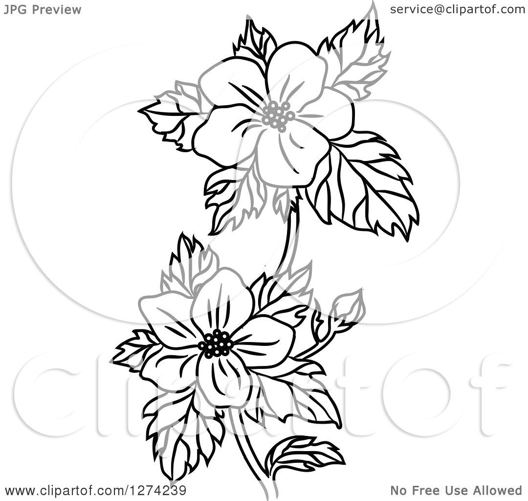Clipart of a Black and White Dogwood Flower Stem.