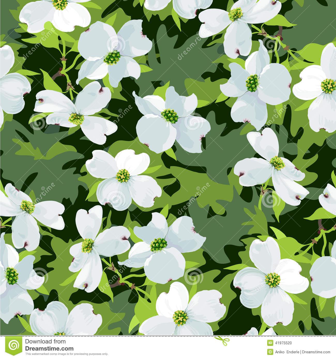 Dogwood Flower Stock Illustrations.