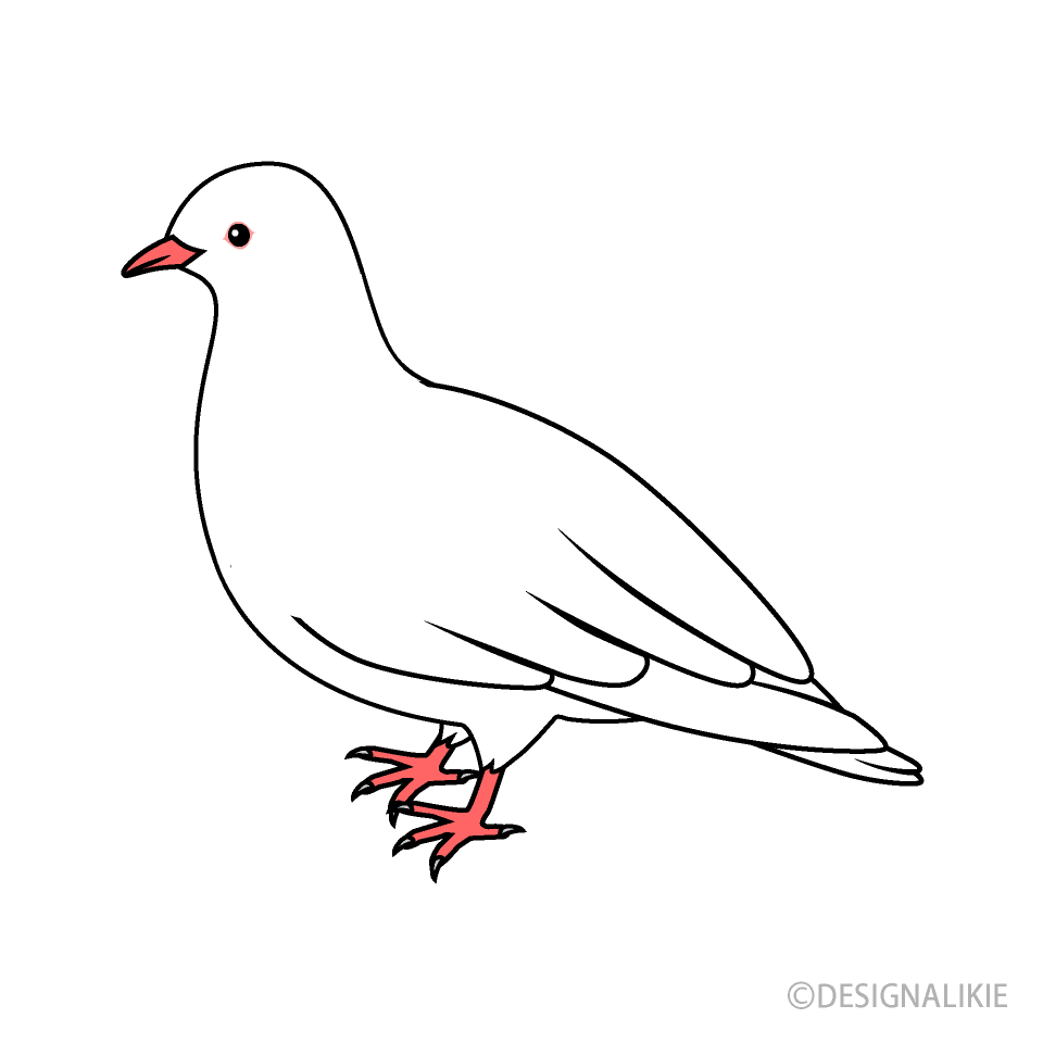 Free White Dove Clipart Image|Illustoon.