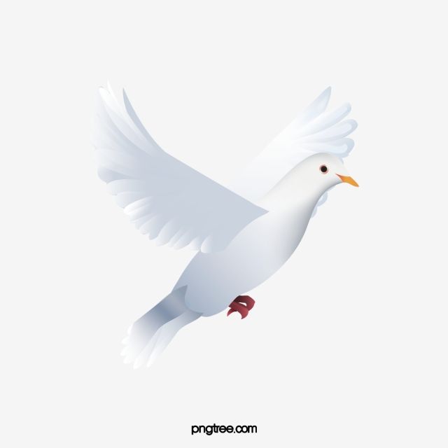 White Dove Png, Vector, PSD, and Clipart With Transparent Background.