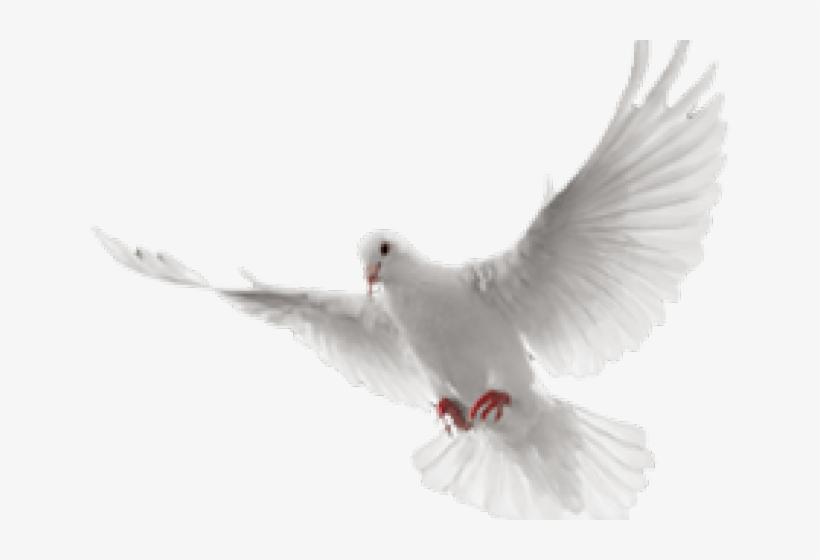 White Dove Clipart In Flight.