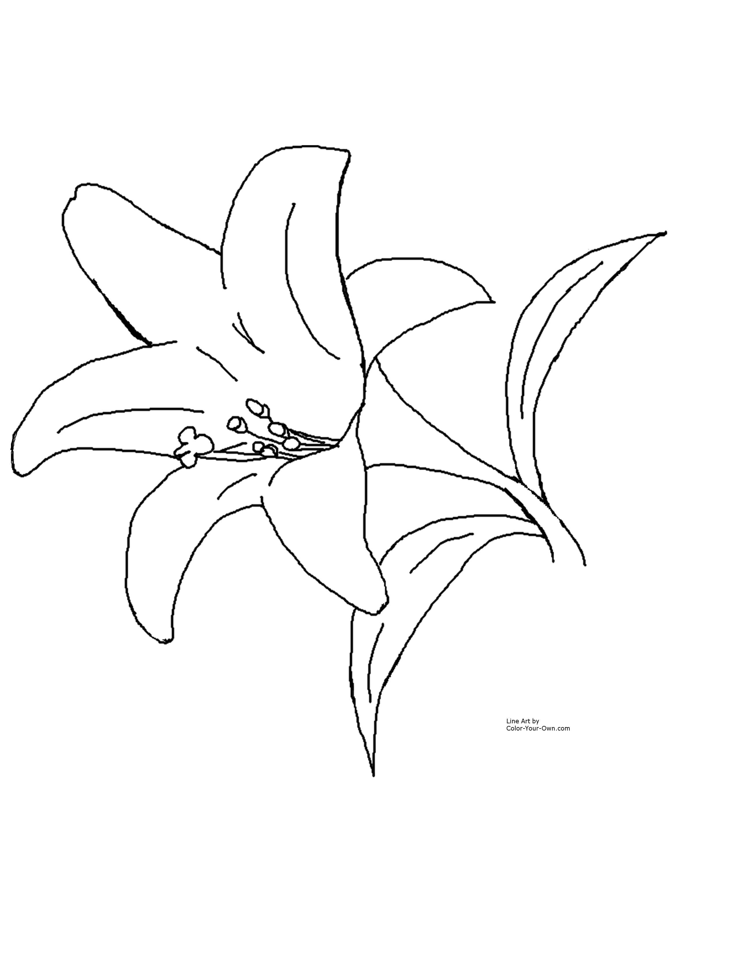 Easter lily clipart black and white 3 » Clipart Station.