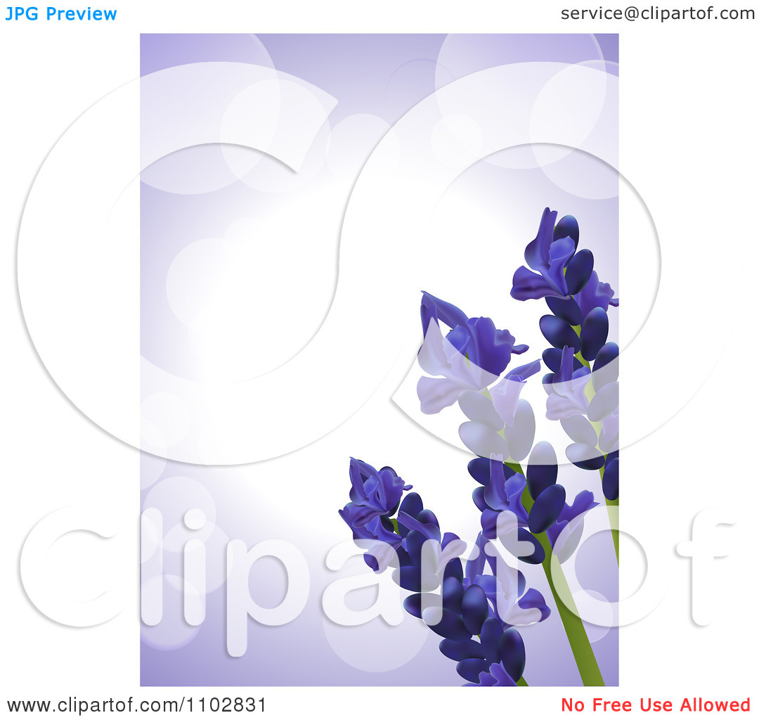 Clipart 3d Lavender Flowers Over Purple Flares, With White Edges.