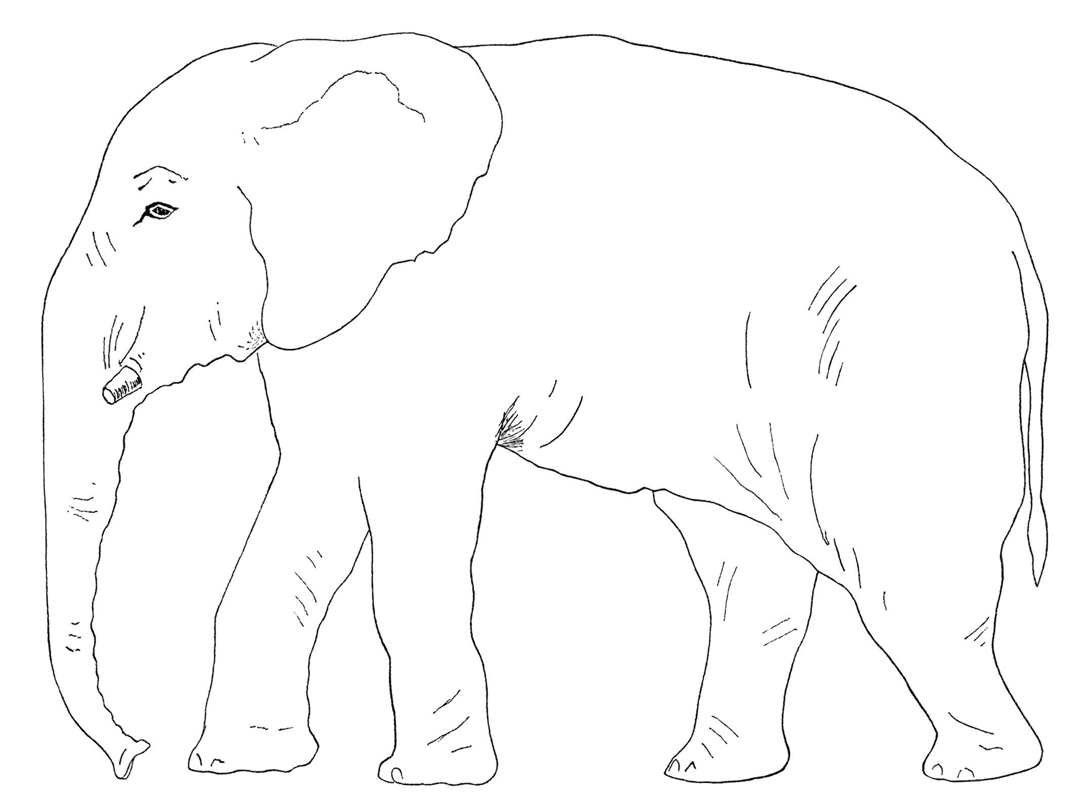 elephant clipart, old book page, vintage party game.