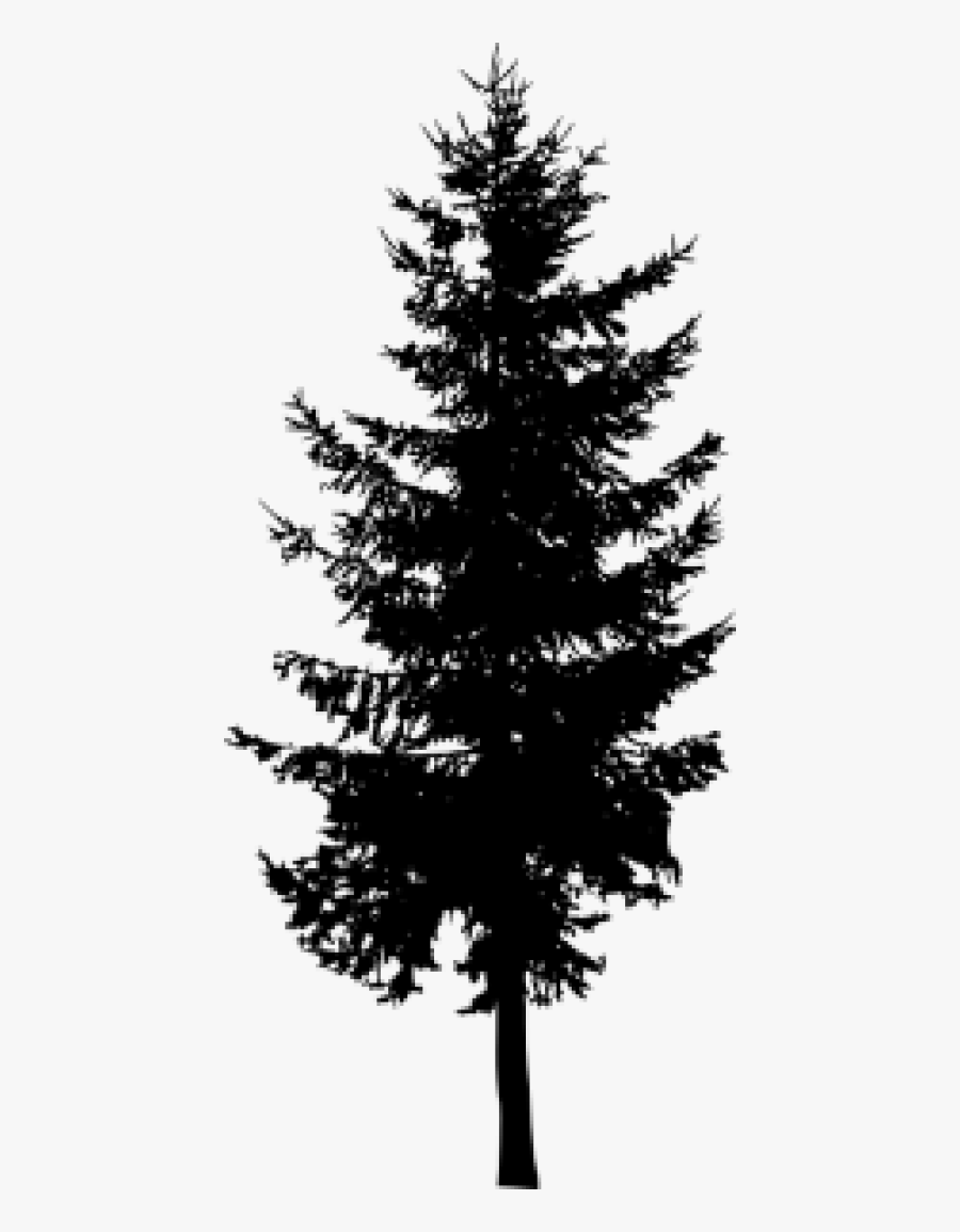 Transparent Evergreen Tree Clipart Black And White.