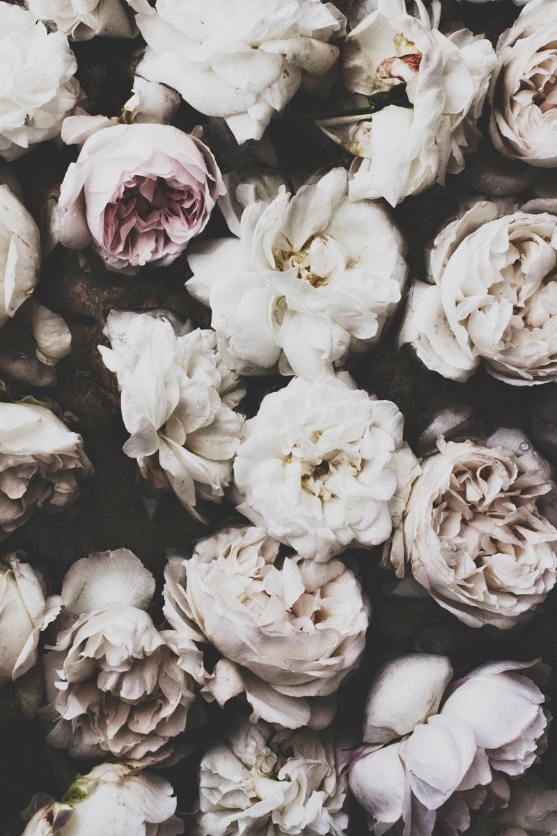 Faded flowers..