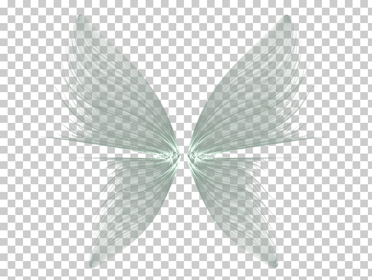 Butterfly Drawing Feather, Wings Transparent Background.