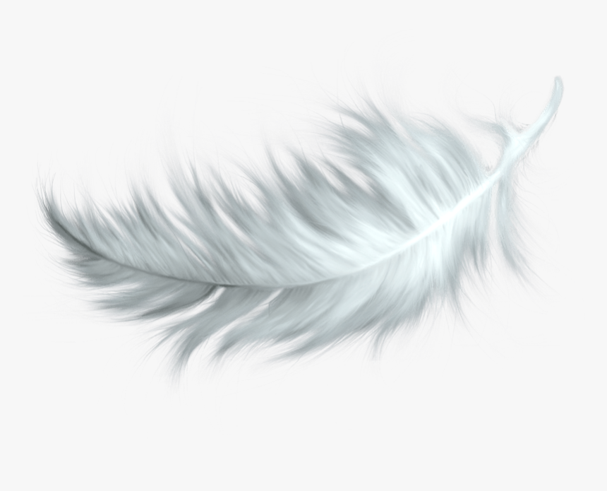 White Feather Transparent Png.