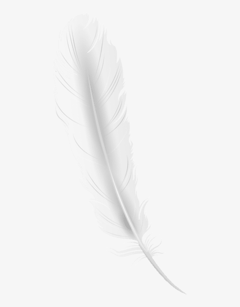 Free Png Download White Feather Clipart Png Photo Png.