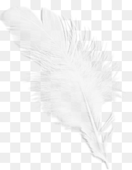 White Feather PNG Images.