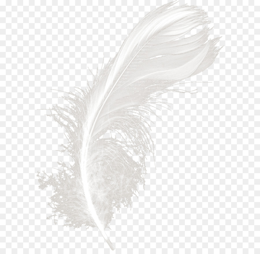 White Feather Png (102+ images in Collection) Page 1.