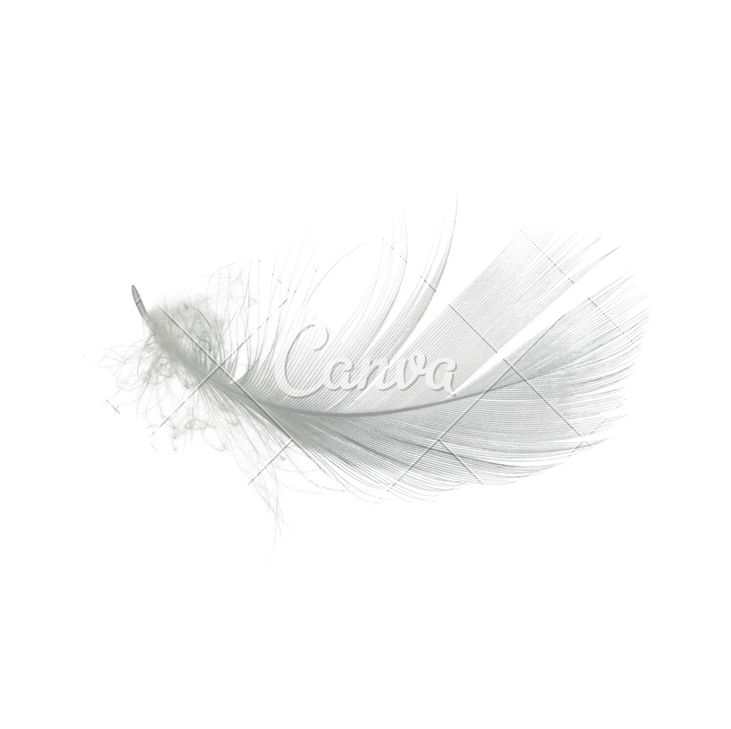 White Feather PNG High.