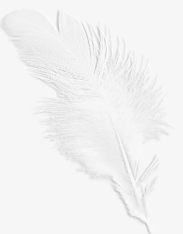 White Feathers, White, Feather, Pretty PNG Transparent Image and.