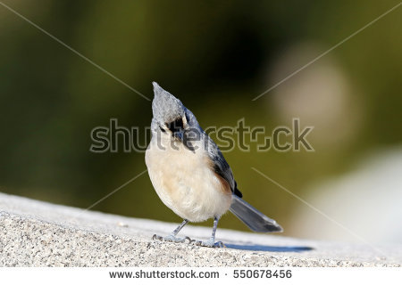 Feather Tufts Stock Photos, Royalty.