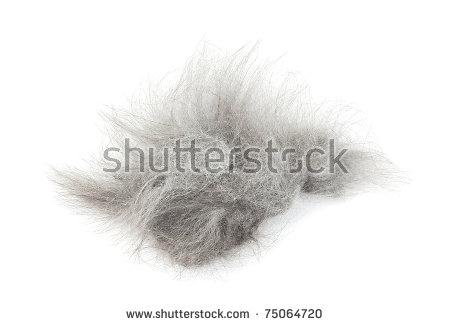 Tuft Of Hair After Shaving Cat Stock Photo 75064720 : Shutterstock.