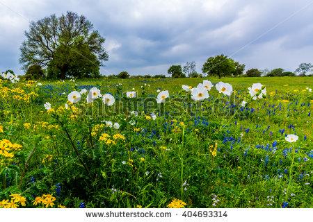 Texas Landscape Stock Photos, Royalty.