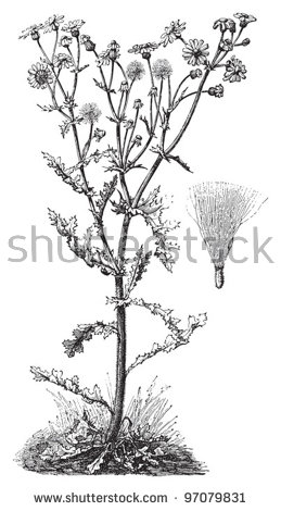 Antique Botanical Stock Vectors, Images & Vector Art.