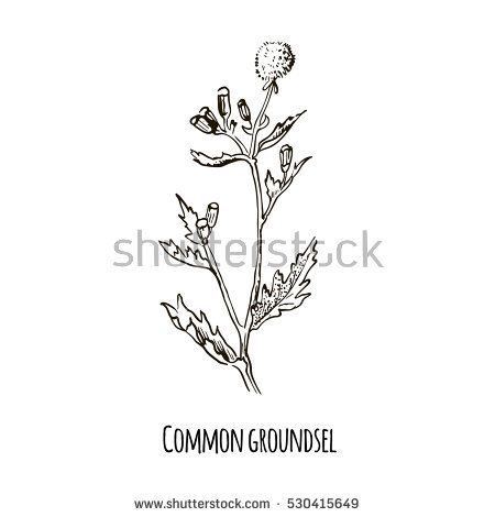 Thistle Flower Vector Plant Isolated On Stock Vector 421091365.