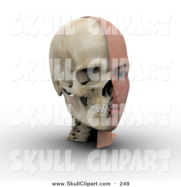 Clip Art of a 3d Male Head Showing Half with Flesh, Half with Bone.