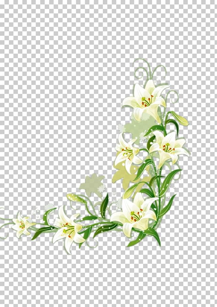 Lilium candidum Border Flowers, White lily, white flowers.