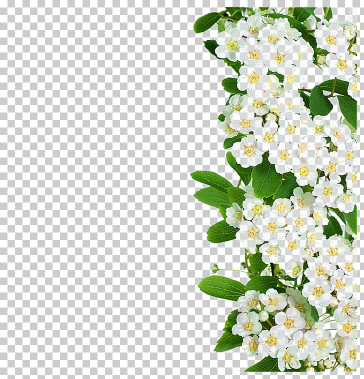 Flower White, White flowers green leaves, white flowers.