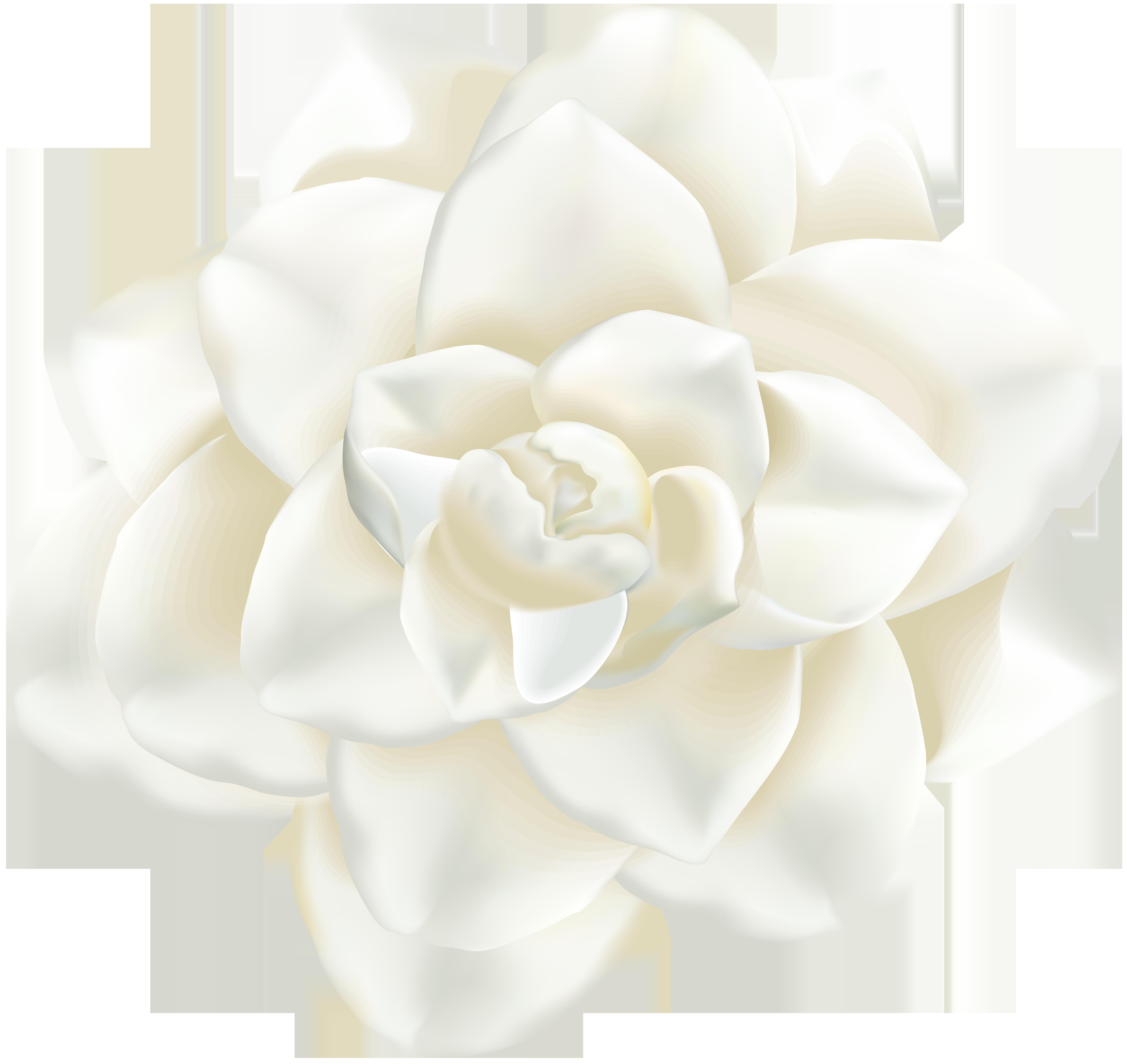 White Flower PNG Clip Art Image.