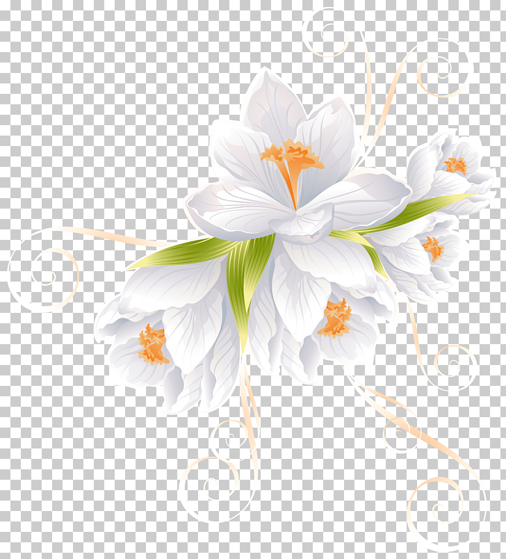 Flower , White Flower Decor Transparent , white Crocus.