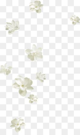 Pin by pngsector on PNG Image of Flower in 2019.