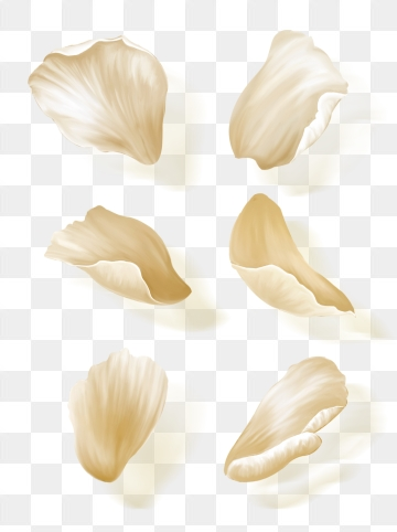 White Petals Png, Vector, PSD, and Clipart With Transparent.