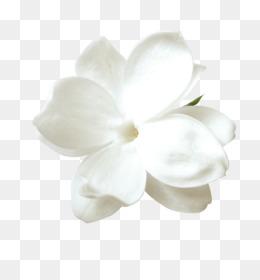 Flower Petal White PNG.