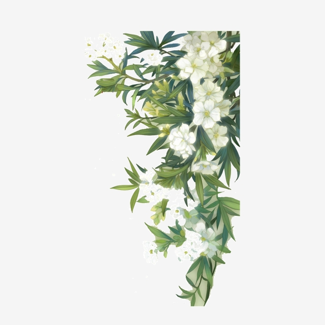 White Flower PNG Images.