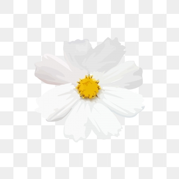 Small White Flowers PNG Images.