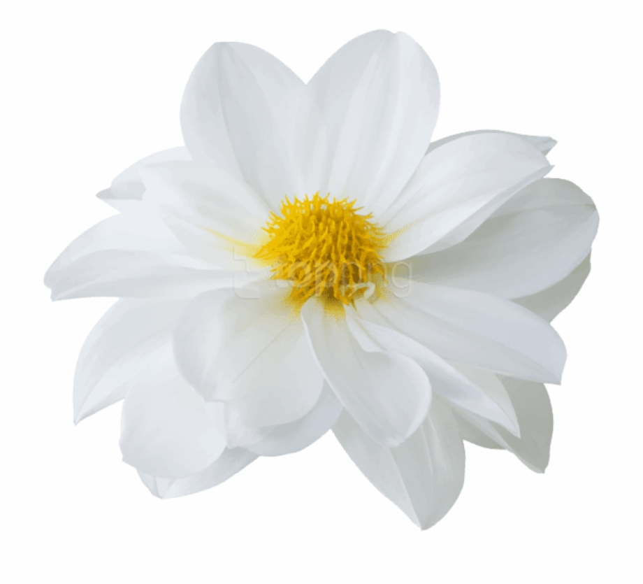 Download Free png Latest Download Beautiful White Flower Png Images.