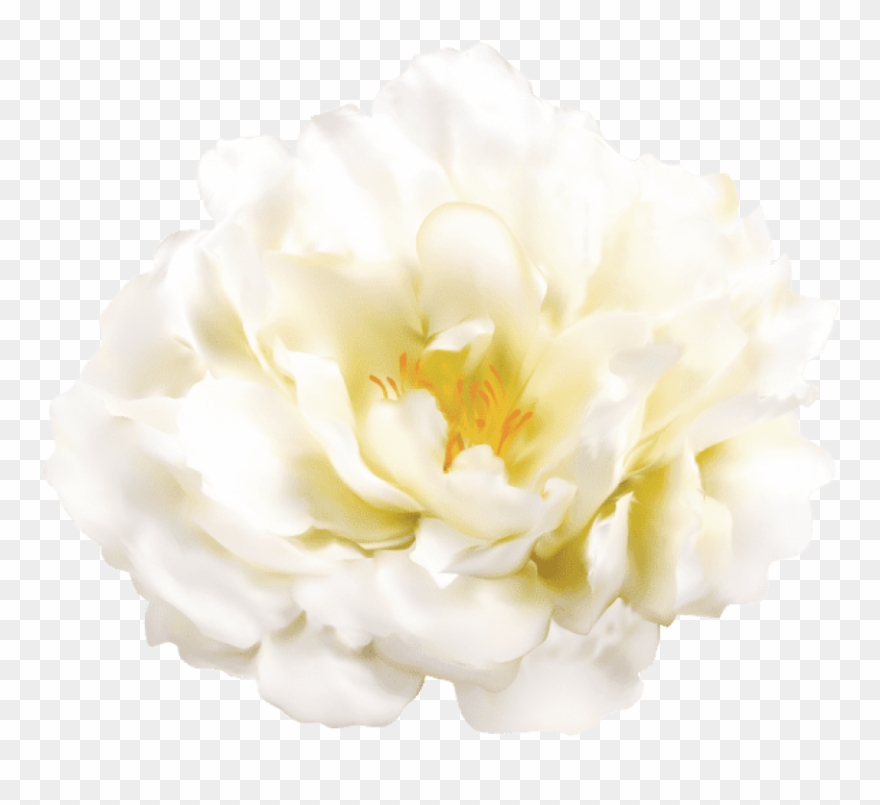 Free Png Download White Flower Transparent Png Images.