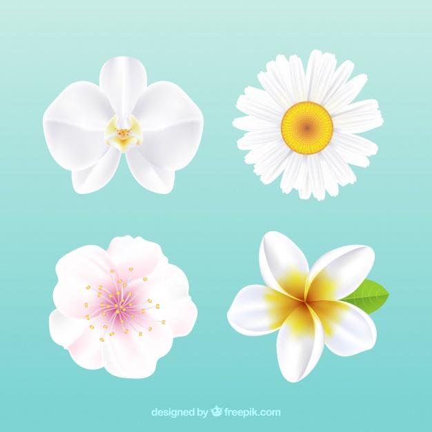 White Flowers Vectors.