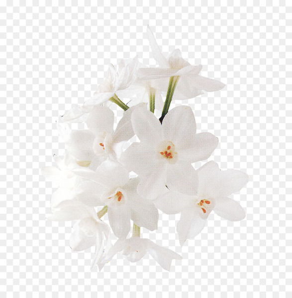 Transparent Background White Flower Png