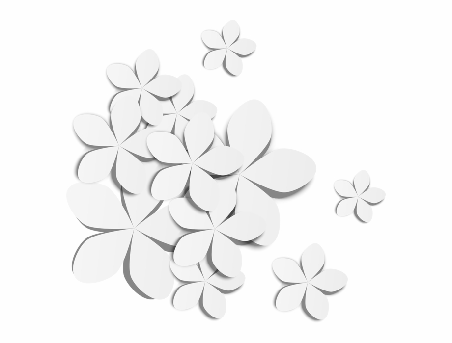 White Flowers Transprent Png Free Download Symmetry.