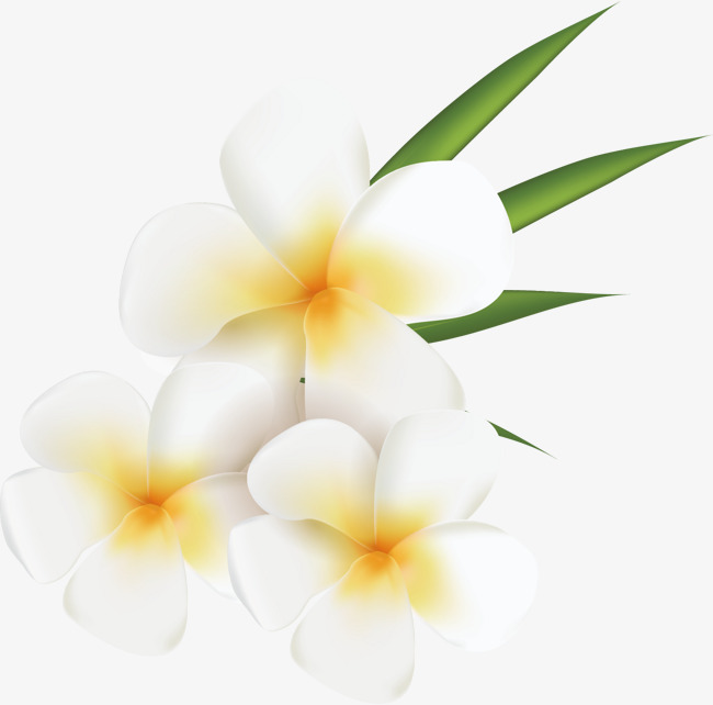 White Flower Vector, Flower Vector, Flowers, Hand Painted PNG and.