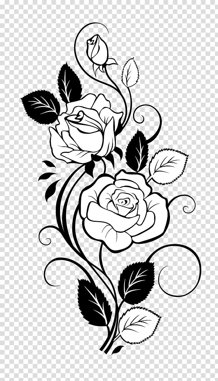 White flower illustration, Rose Drawing Vine , Rose.