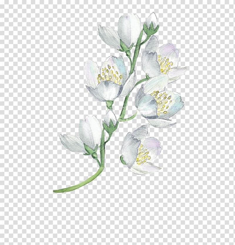 White flowers, Watercolor painting Flower Floral design.