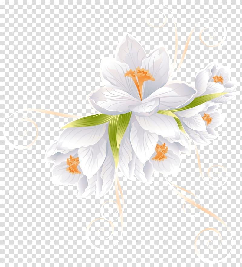 White Crocus flowers illustration, Flower , White Flower.