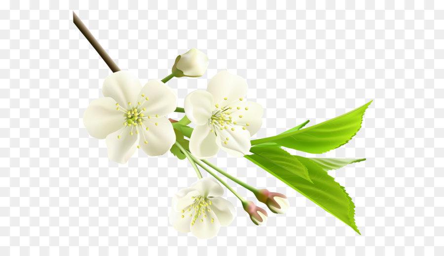 Flower Branch Spring Plant.