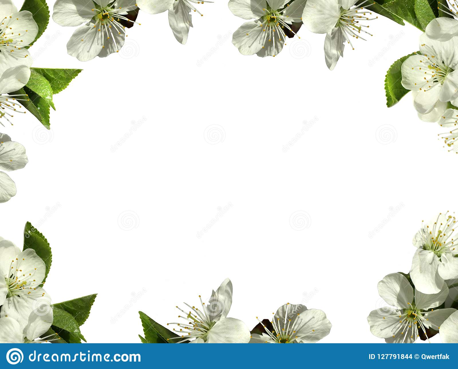Frame With White Flowers. PNG. Stock Photo.