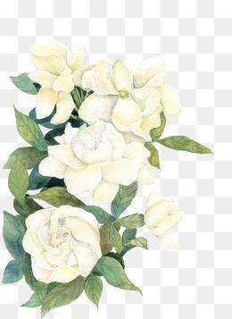 2019 的 Flower, Flower Clipart, White Flower, White PNG Transparent.