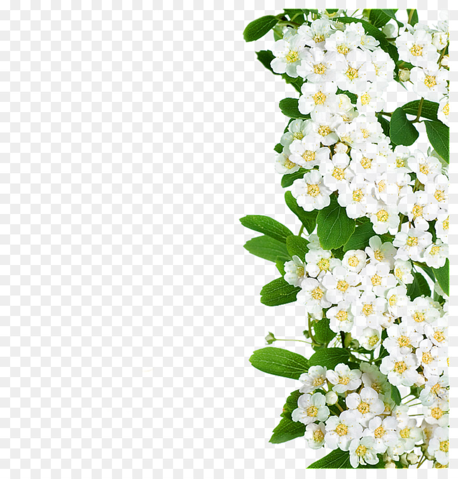 Floral Spring Flowers png download.